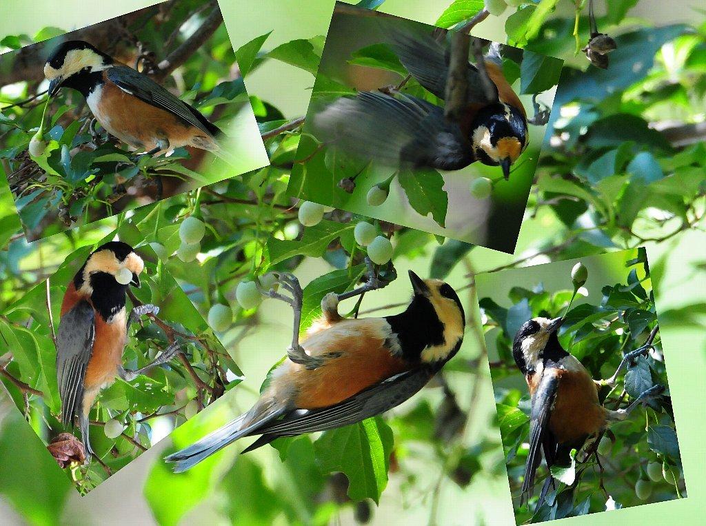 とにかく確実な鳥の居る所に行って来ました!_b0404848_19205403.jpg