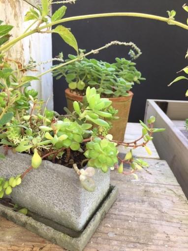 入荷しました~ガーデン雑貨販売と外構工事の広島市佐伯区楽樹工房_f0205854_15010686.jpg