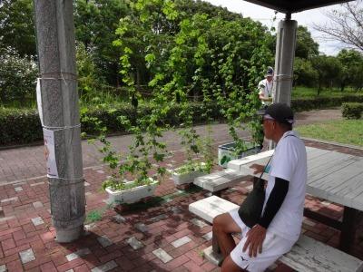 緑のカーテン(ゴーヤ)栽培実験R2.9.8_d0338682_16073435.jpg