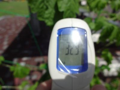 緑のカーテン(ゴーヤ)栽培実験R2.9.8_d0338682_16195874.jpg