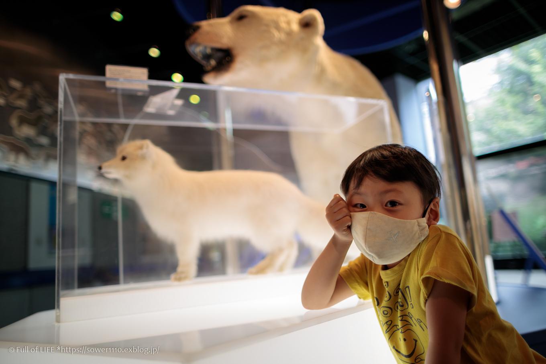 夏の終わりに博物館へ「ミュージアムパーク茨城県自然博物館」後編_c0369219_08315480.jpg