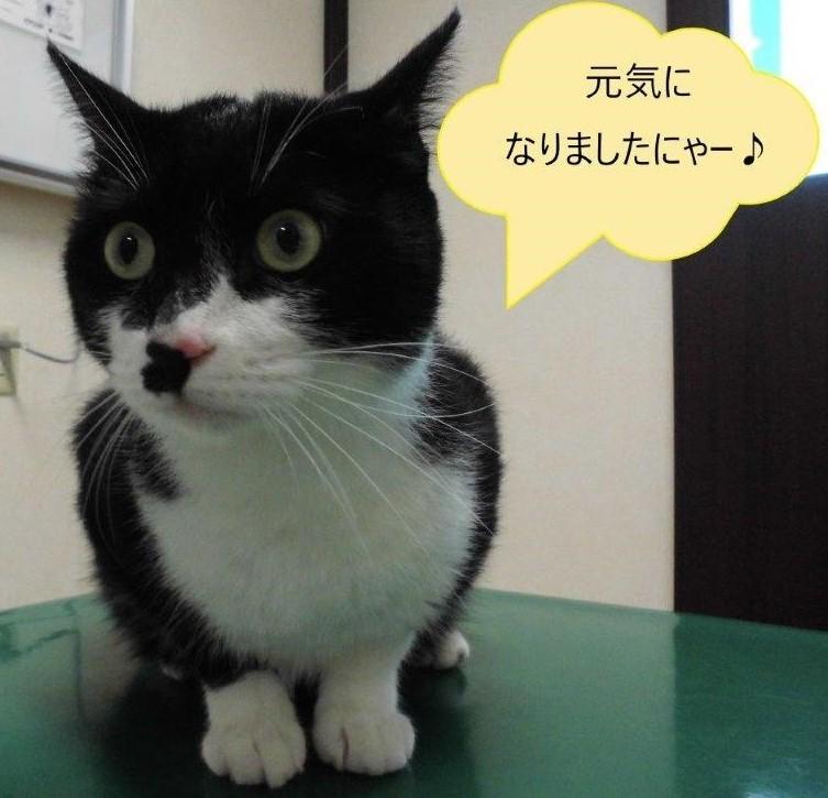 猫のクロちゃん_b0059154_12370549.jpg