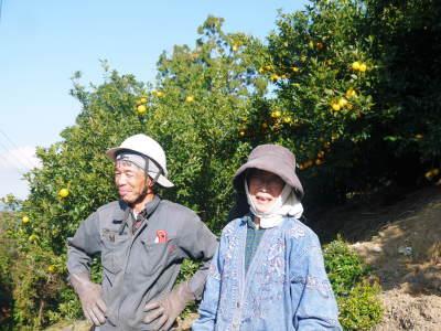 令和2年度の香り高き『青柚子』予約販売受付スタート!手作り「柚子こしょう」を作ってみませんか?_a0254656_17343830.jpg