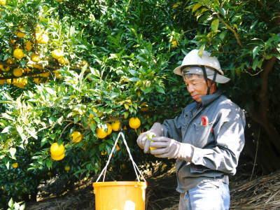 令和2年度の香り高き『青柚子』予約販売受付スタート!手作り「柚子こしょう」を作ってみませんか?_a0254656_17362052.jpg
