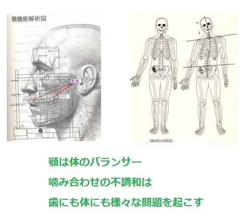 顎は体のバランサー_d0338857_16203317.jpg