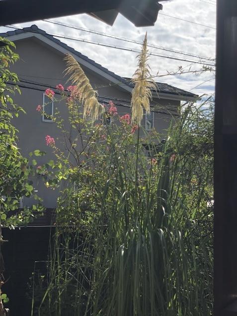 ガーデンハウスから見た「パンパスグラス」_a0243064_11480815.jpg