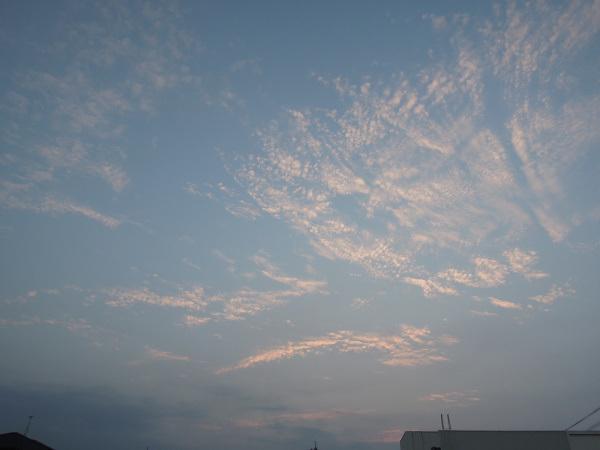 可愛い鳴き声に癒された朝_b0366871_19264536.jpg