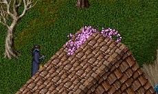 桜の花、咲くころ_e0068900_23472819.jpg