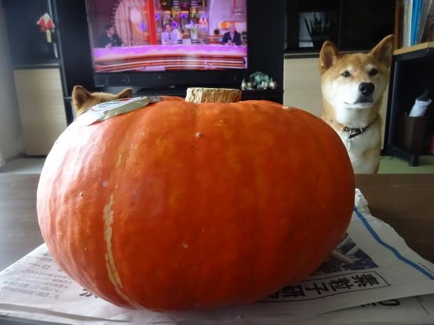 来年もフクプーポーかぼちゃに期待したいです❣_d0380572_20045212.jpg