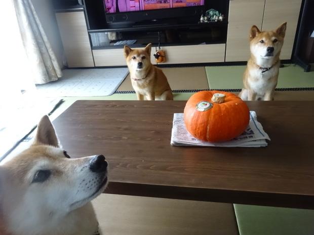 来年もフクプーポーかぼちゃに期待したいです❣_d0380572_20162138.jpg