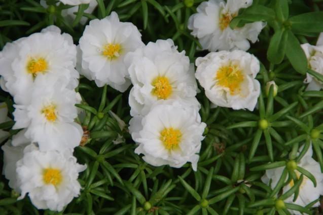 9月7日自宅の庭の花々_d0034980_19232366.jpg