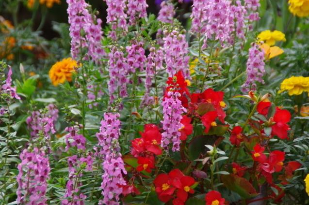 9月7日自宅の庭の花々_d0034980_19242258.jpg