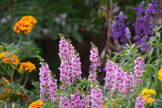 9月7日自宅の庭の花々_d0034980_19261585.jpg