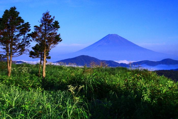 令和2年8月の富士(21) 大観山から遠望富士 _e0344396_21262920.jpg