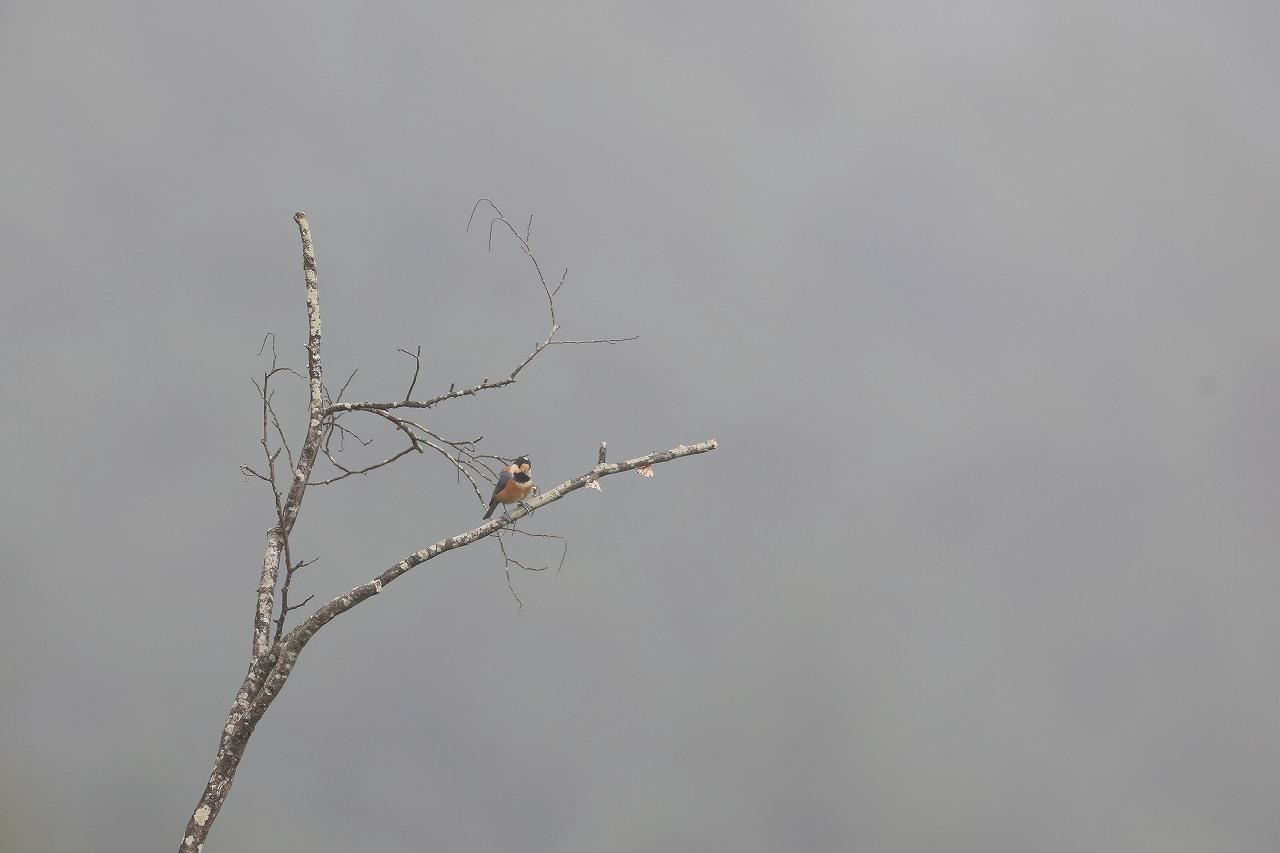 鷹の渡り_f0296999_18153887.jpg