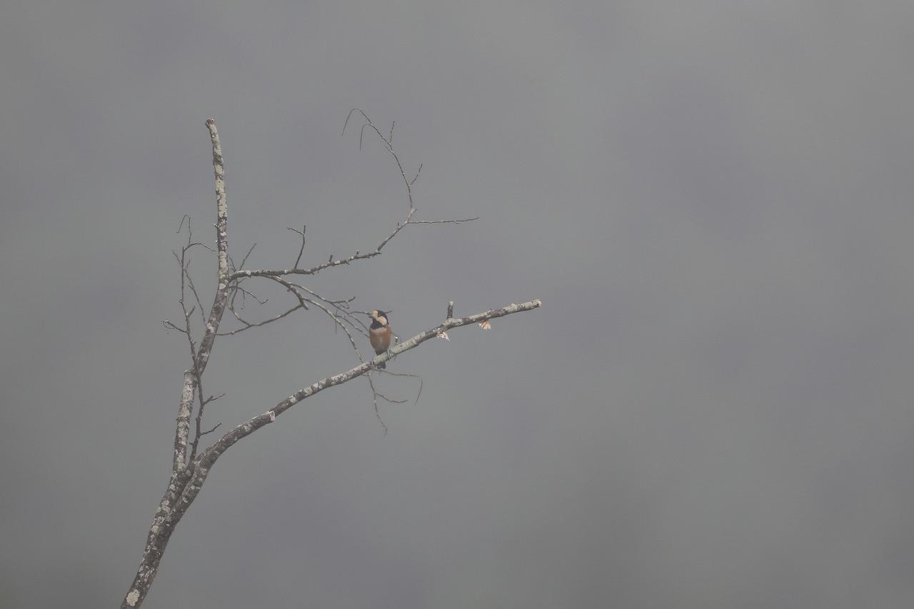 鷹の渡り_f0296999_18154478.jpg