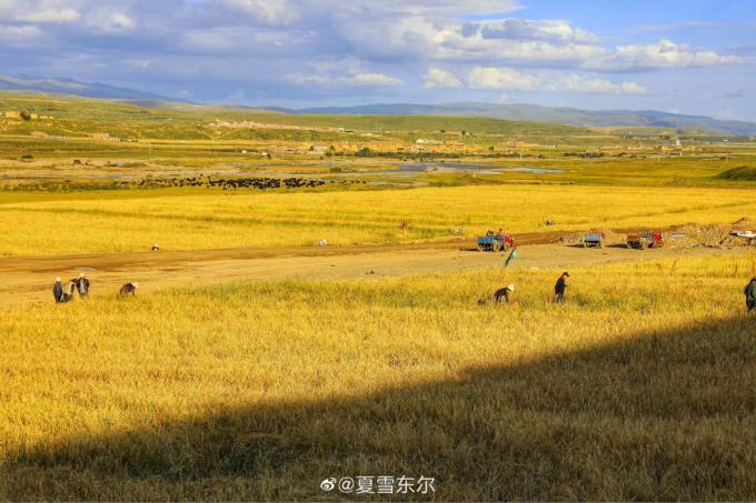 喜び溢れる収穫祭…🎵_c0162404_11121005.jpg