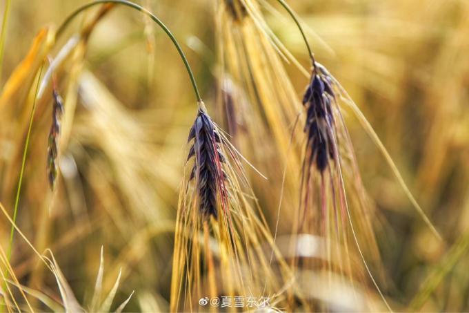 喜び溢れる収穫祭…🎵_c0162404_11121182.jpg
