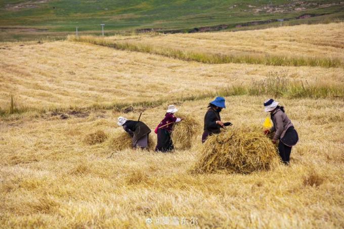 喜び溢れる収穫祭…🎵_c0162404_11121251.jpg