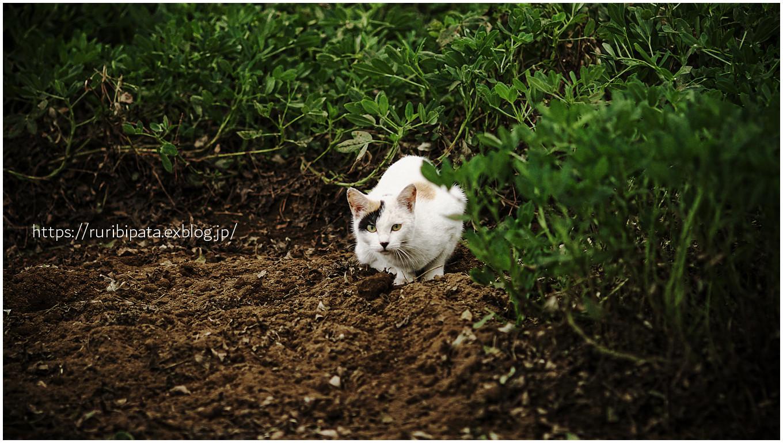 """過去猫 \""""窺う その2\""""_f0302613_14585061.jpg"""