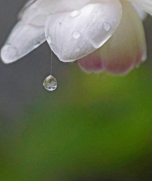 水滴・・2_d0162994_08374412.jpg