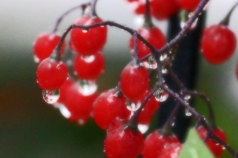 水滴・・2_d0162994_08441677.jpg