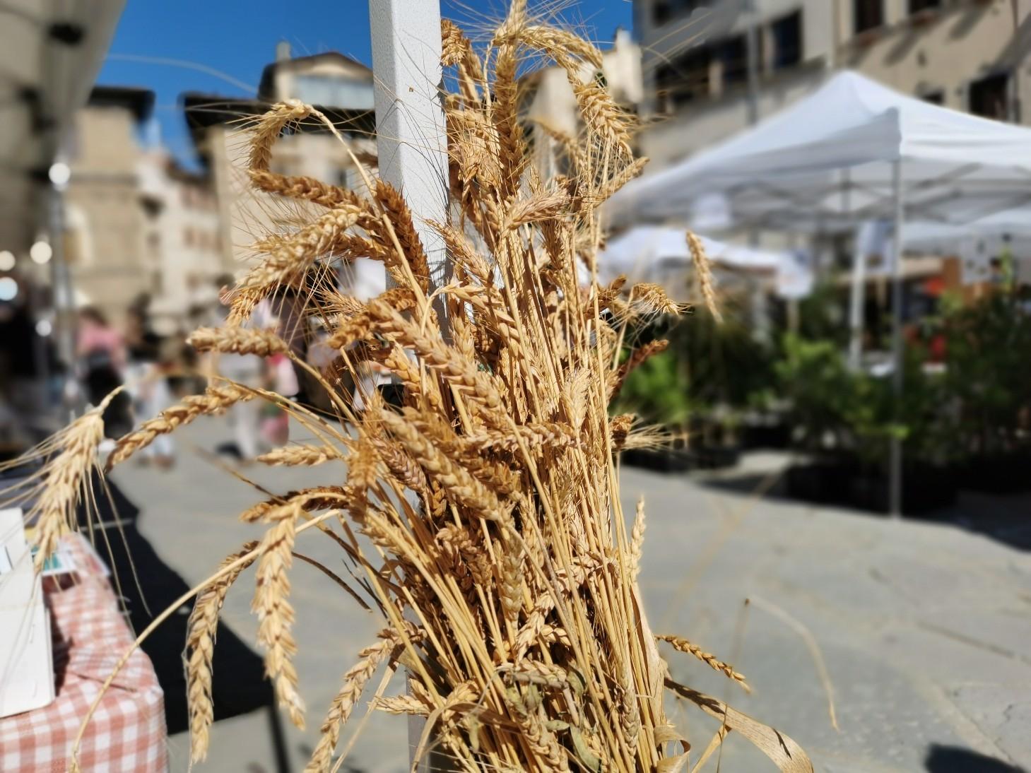 フィレンツェのオーガニック市フィエルーコラ~今回のテーマは「パン」_f0106597_04144455.jpg