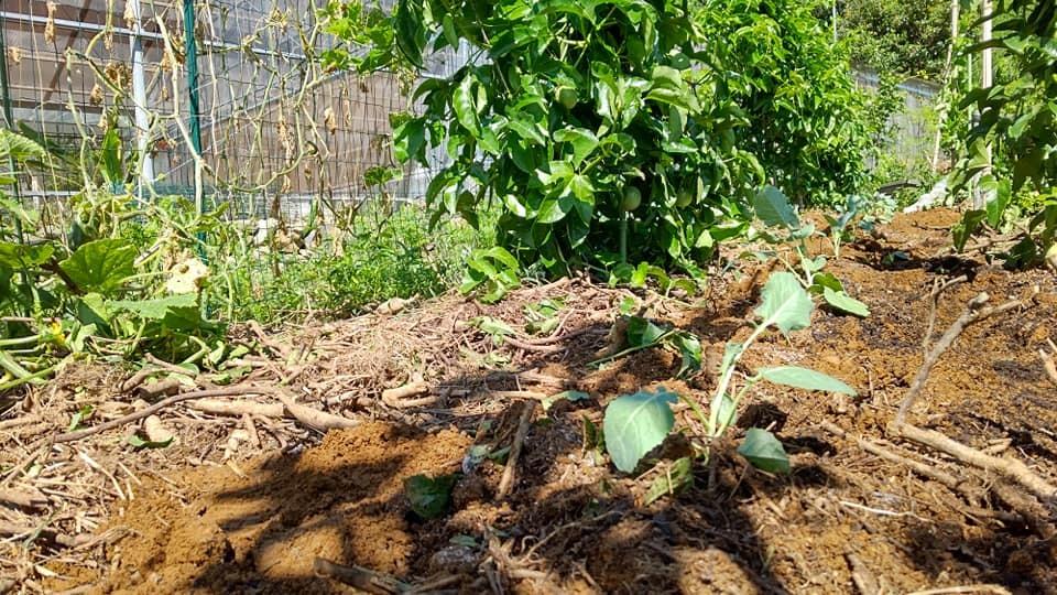 9月13日(日)農園カフェのご案内_b0028299_13515914.jpg
