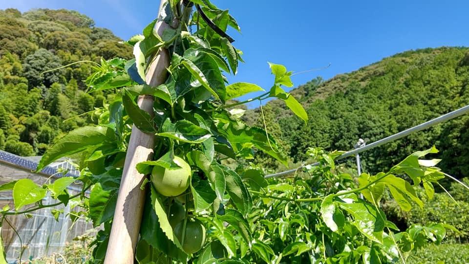 9月13日(日)農園カフェのご案内_b0028299_13524206.jpg