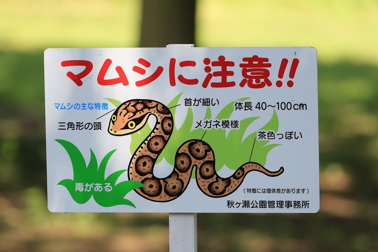 AK公園にて_f0296999_14361045.jpg