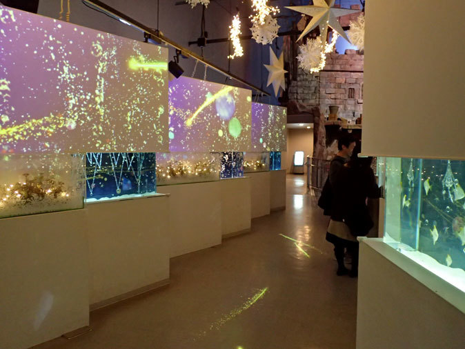 アクアパーク品川「星空のクリスマス」:Bright Sky Street①~マツカサウオとヒメツバメウオ_b0355317_22193807.jpg