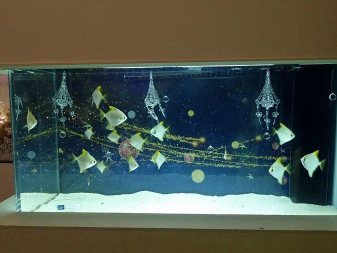 アクアパーク品川「星空のクリスマス」:Bright Sky Street①~マツカサウオとヒメツバメウオ_b0355317_22245676.jpg