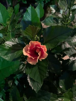 Aloha Kakahiaka_e0365633_19280368.jpg