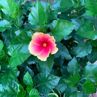 Aloha Kakahiaka_e0365633_19315344.jpg