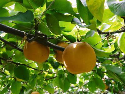 敬老の日ギフトはお決まりですか?みずみずしいフルーツを送りませんか!令和2年のラインナップでご紹介!_a0254656_15180303.jpg