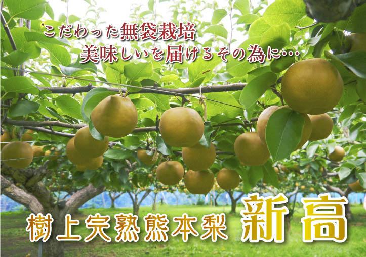 敬老の日ギフトはお決まりですか?みずみずしいフルーツを送りませんか!令和2年のラインナップでご紹介!_a0254656_15281249.jpg