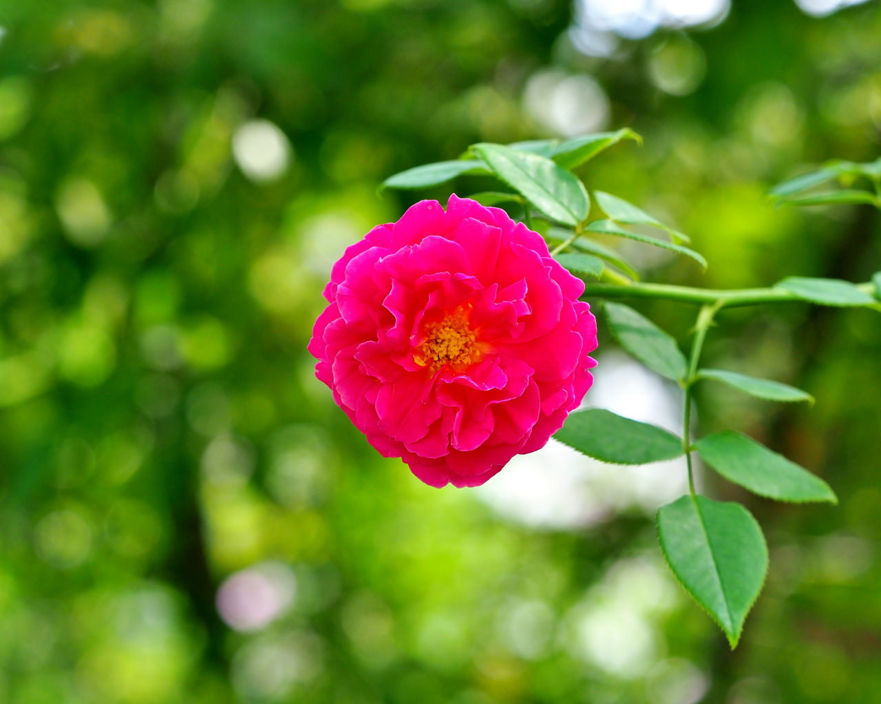 軽井沢レイクガーデンから この時期の花たち_c0305565_17372341.jpg