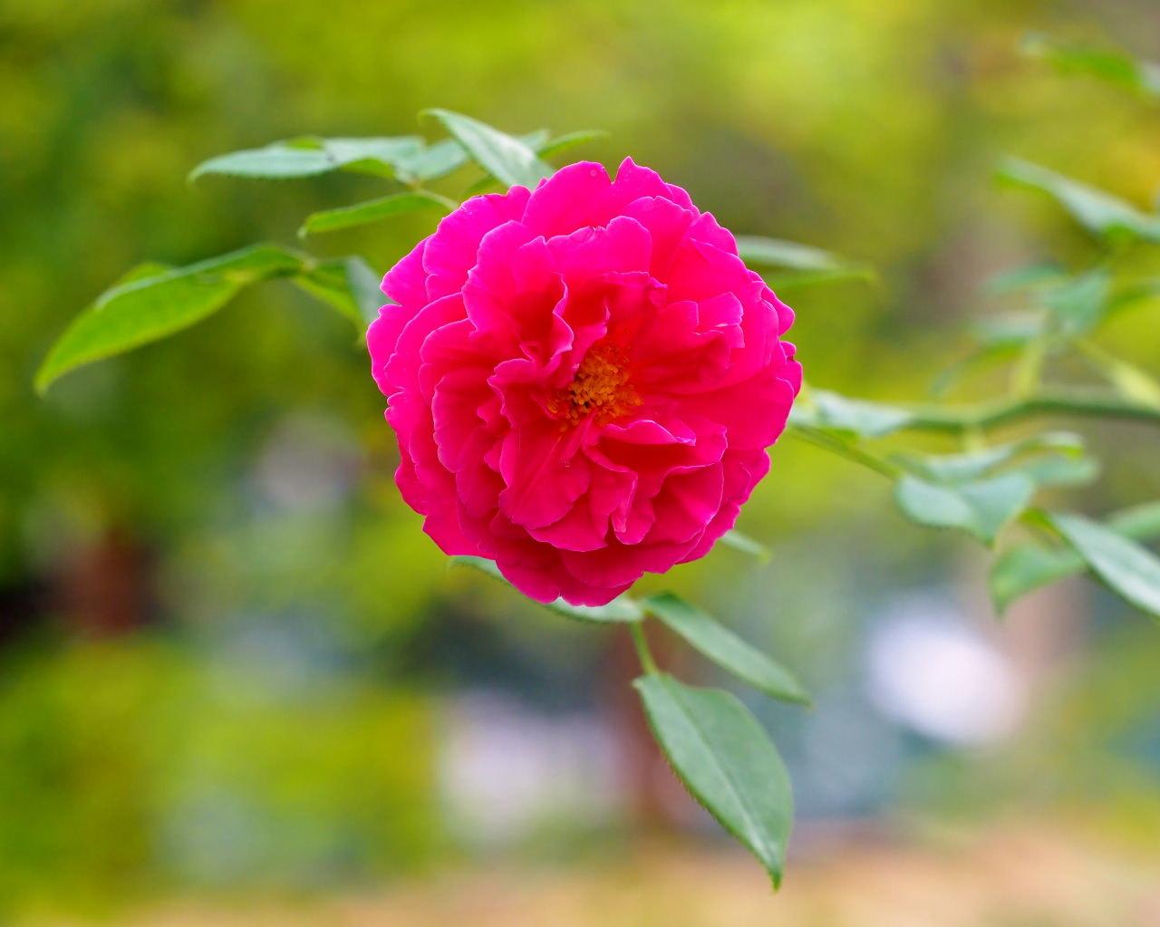 軽井沢レイクガーデンから この時期の花たち_c0305565_17410014.jpg