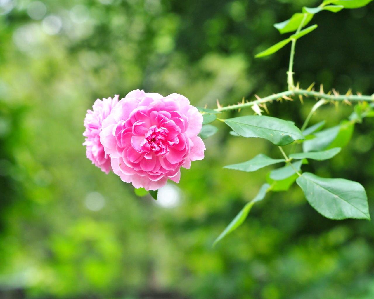 軽井沢レイクガーデンから この時期の花たち_c0305565_17423781.jpg