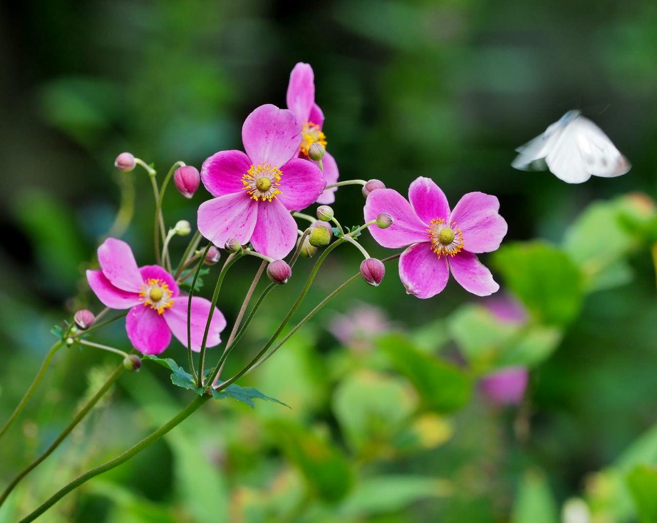 軽井沢レイクガーデンから この時期の花たち_c0305565_17510523.jpg