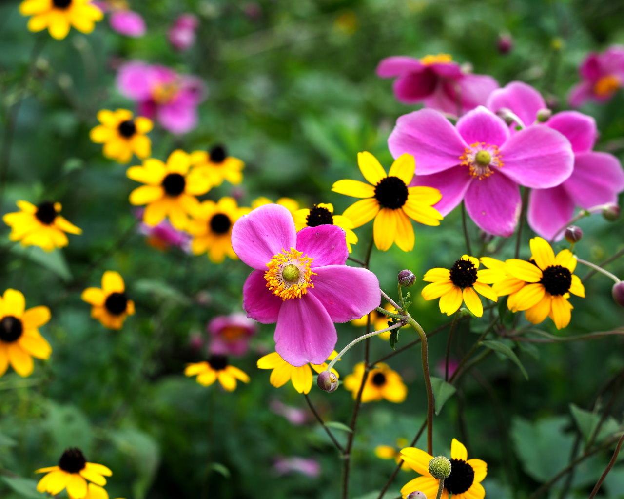 軽井沢レイクガーデンから この時期の花たち_c0305565_17533355.jpg