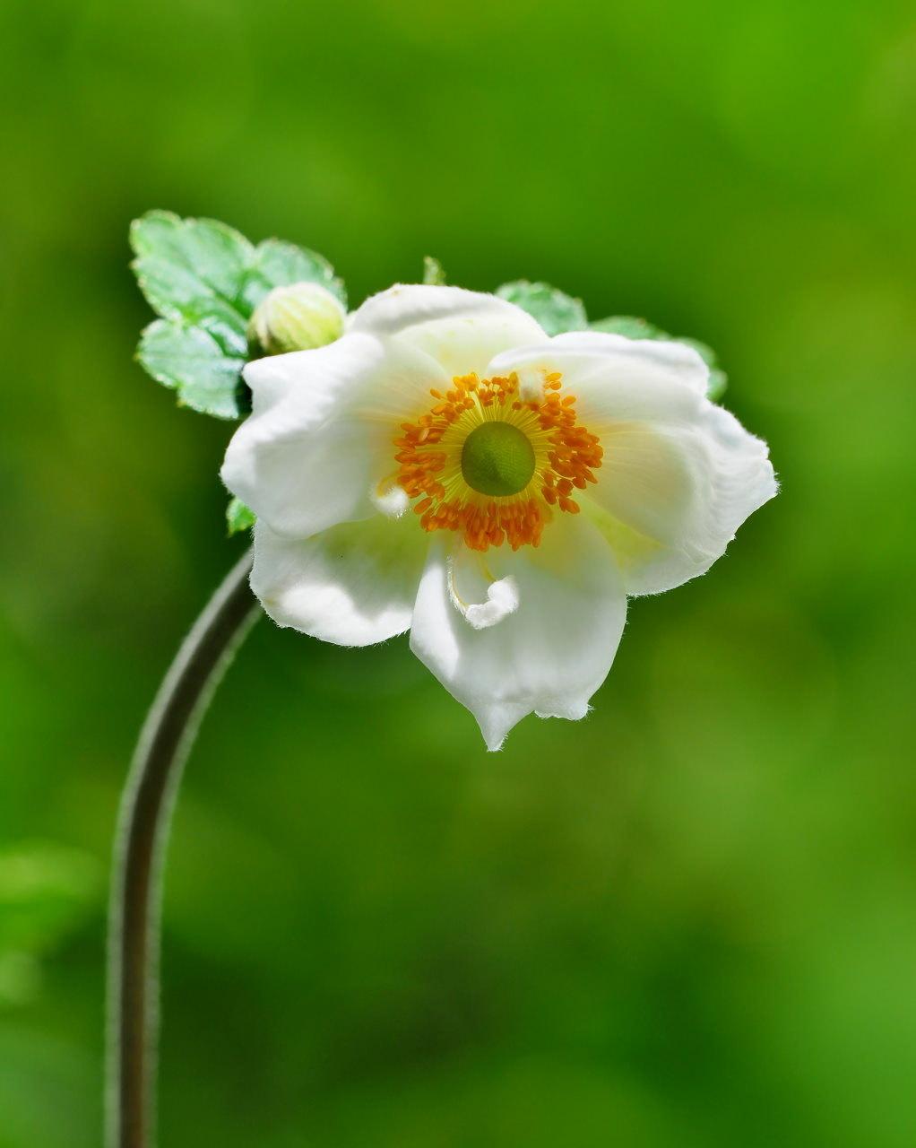 軽井沢レイクガーデンから この時期の花たち_c0305565_17550128.jpg