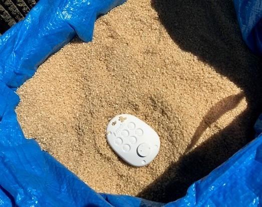 ショック!玄米にコクゾウムシが大量発生2020・09_c0014967_10170966.jpg