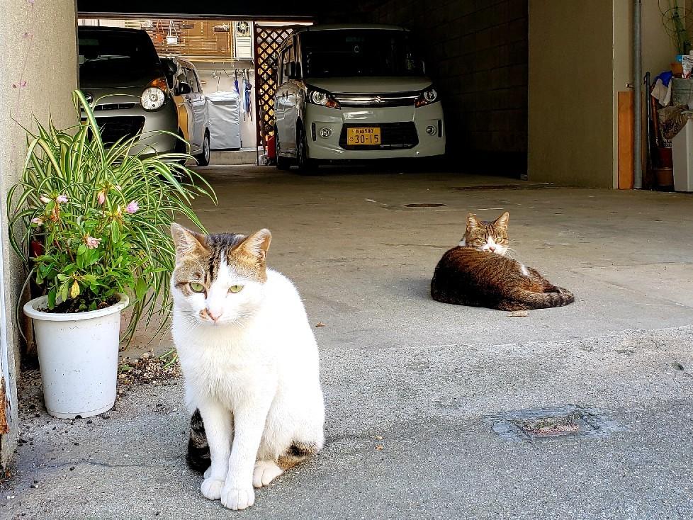 ある外猫の独白2_c0193077_19000300.jpg