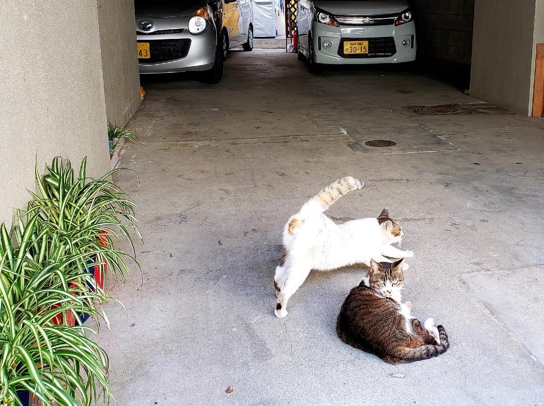 ある外猫の独白2_c0193077_19000303.jpg