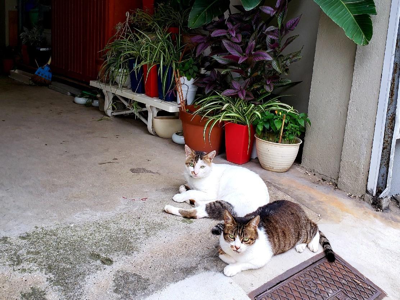 ある外猫の独白2_c0193077_19000425.jpg