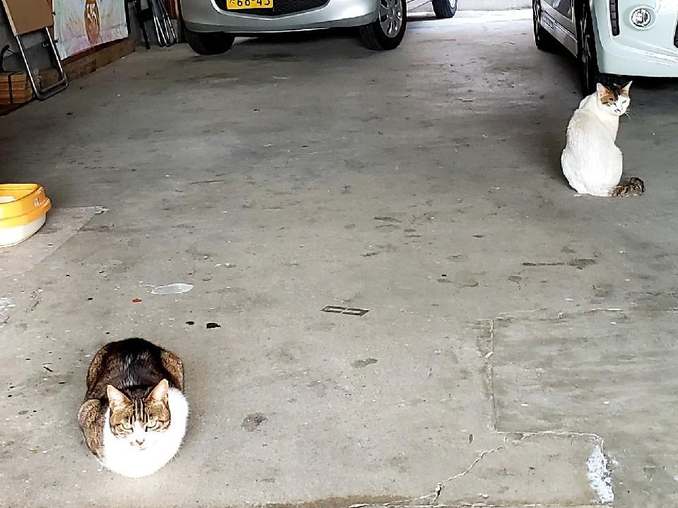 ある外猫の独白2_c0193077_19000463.jpg