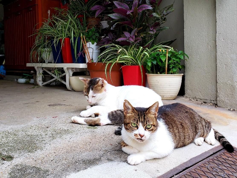 ある外猫の独白2_c0193077_19001909.jpg