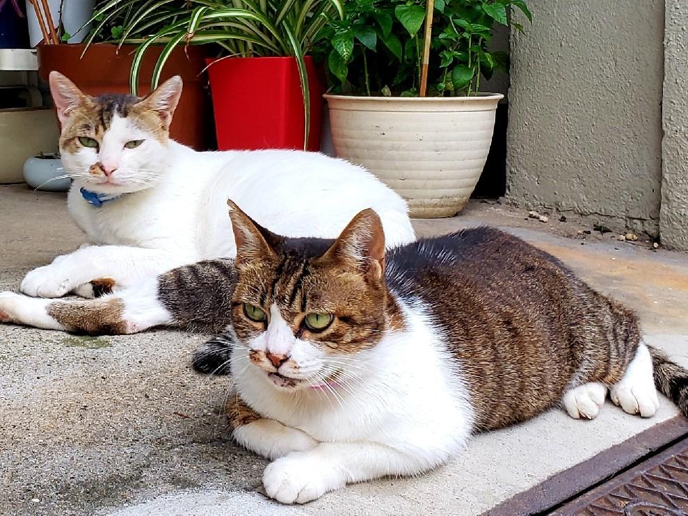 ある外猫の独白2_c0193077_19001993.jpg