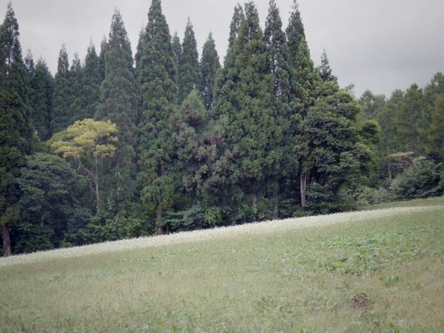 9月12日 娘夫婦に連れられて戸隠の蕎麦畑を見学する。_d0034980_21095242.jpg